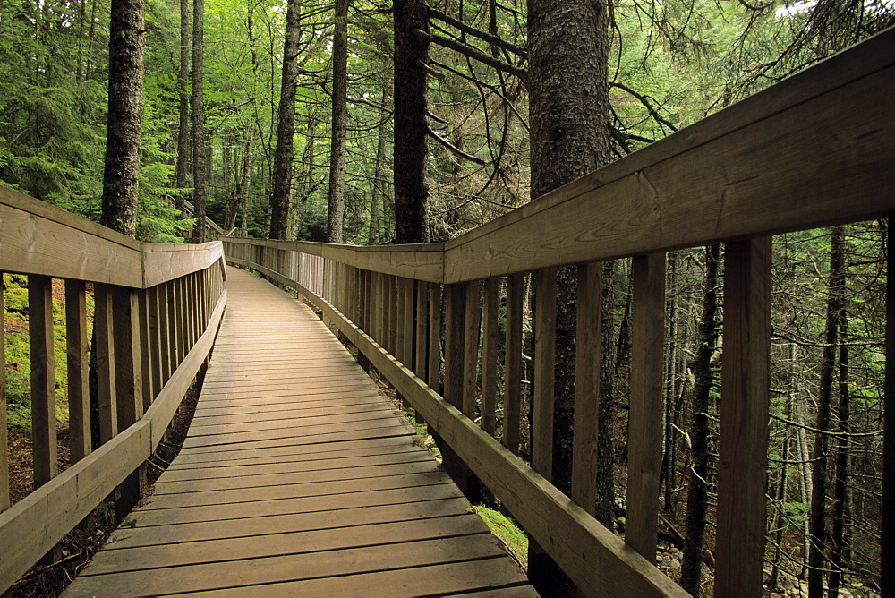 Boardwalk in Fundy national Park, New Brunswick