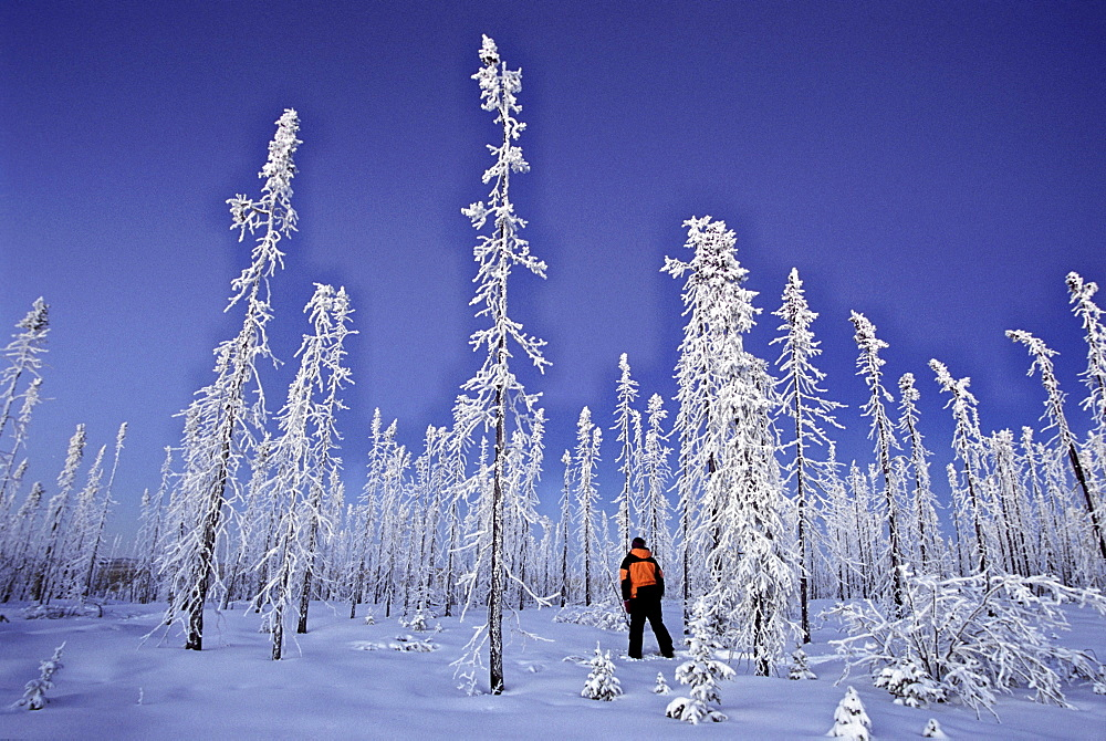 Walking amongst an old Forest Fire in Winter along the Dempster Highway, Yukon