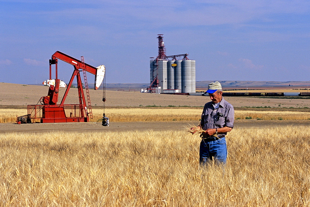 Senior Man in Durum Wheat Field with Pumpjack and Grain Terminal in the background, Gull Lake, Saskatchewan