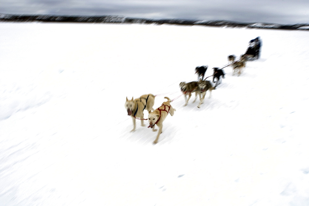 Competitor in the Diavik 150 Mile Dog Sled Race, Yellowknife, Northwest Territories