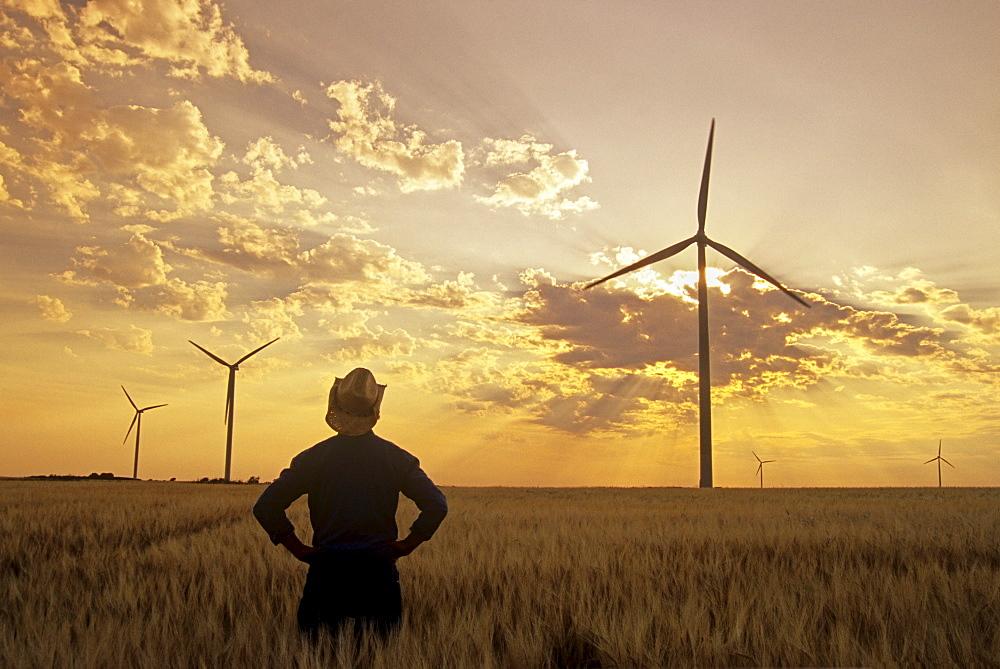 Man in Barley Field with Wind Turbines, near St. Leon, Manitoba