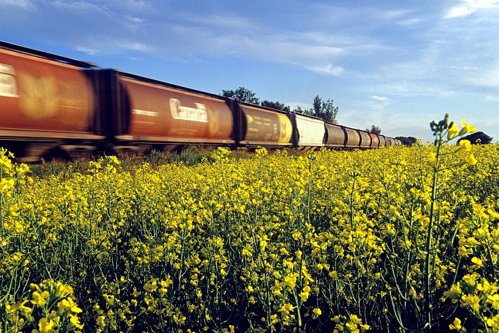Blurred Rail Hopper Cars Passing Canola Field, near Portage la Prairie, Manitoba