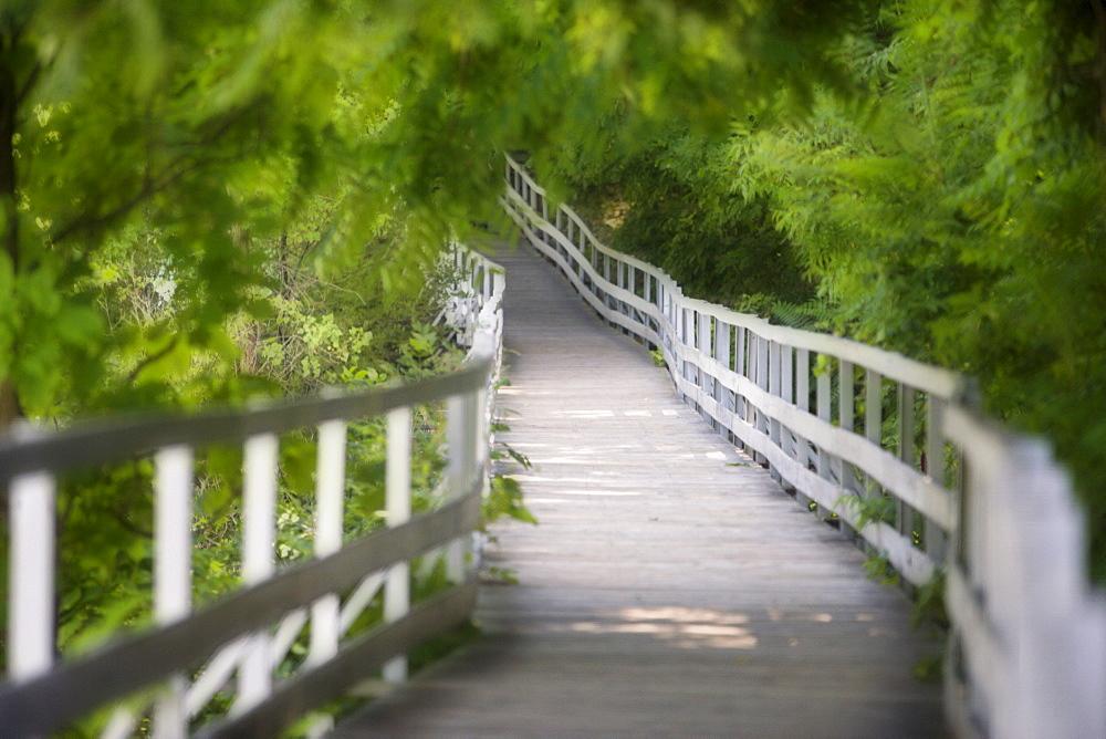 The 'Whitewater Walk' Boardwalk Trail, Niagara Falls, Ontario, Canada