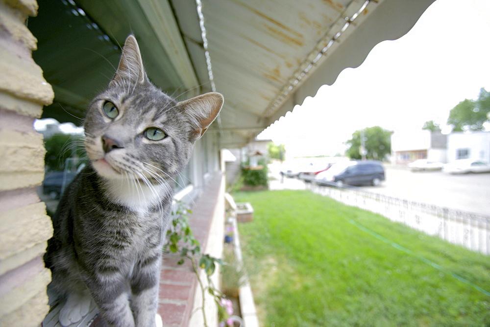 Cat on a Window Sill - 1116-17620