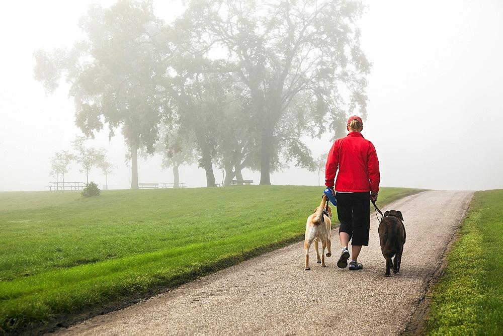Woman walking two Labrador Retrievers through Assiniboine park on foggy morning, Winnipeg, Manitoba