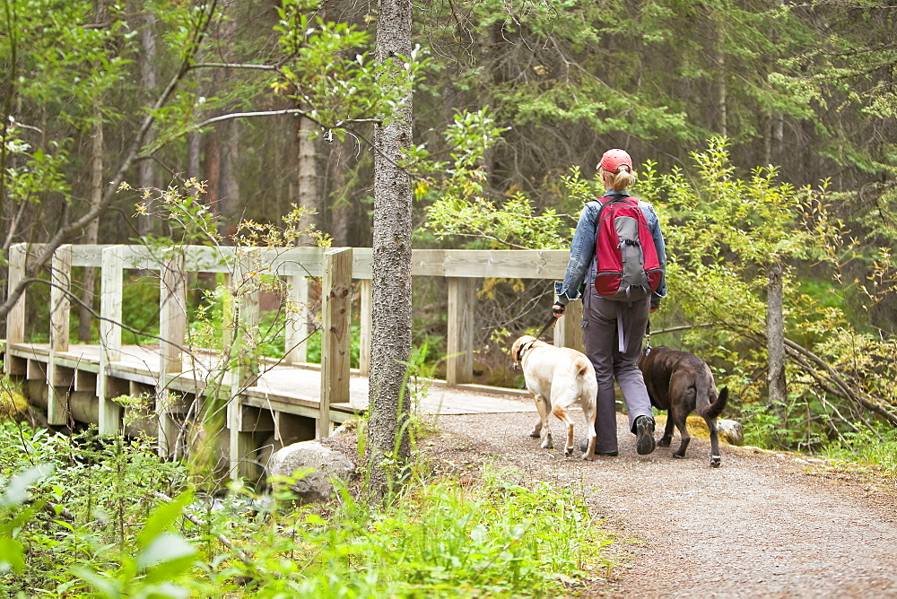 Woman hiking with two Labrador Retrievers, Lake Louise, Banff National Park, Alberta