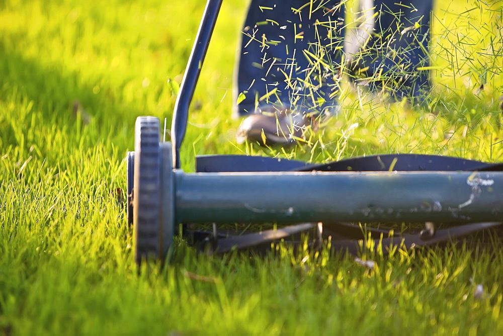 Cutting the grass with environmentally friendly push mower, Winnipeg, Manitoba