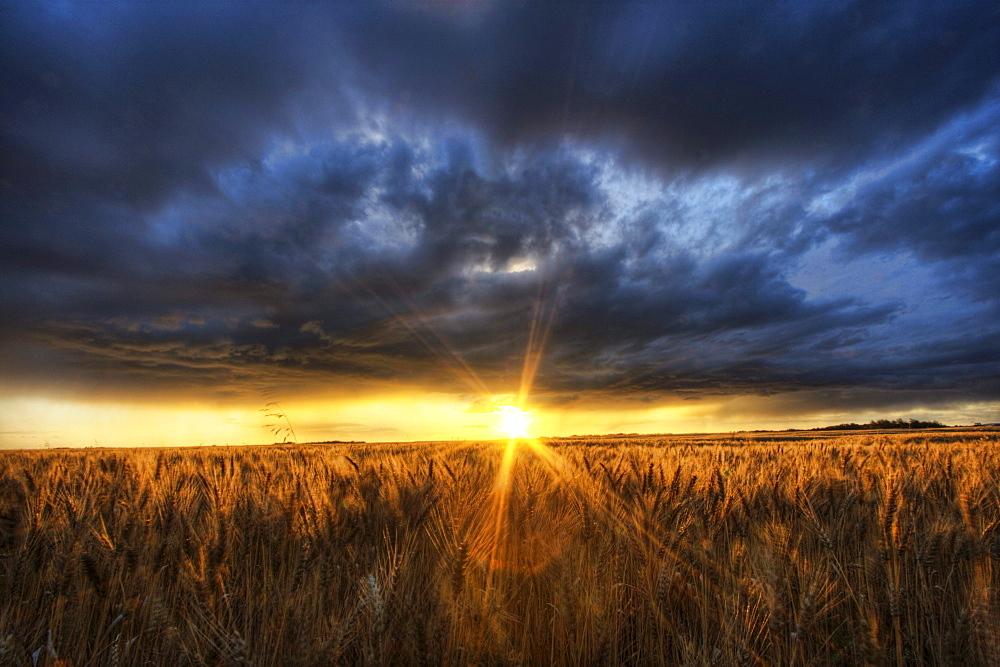 Autumn sunset over a barley field on a farm north of Edmonton, Alberta.