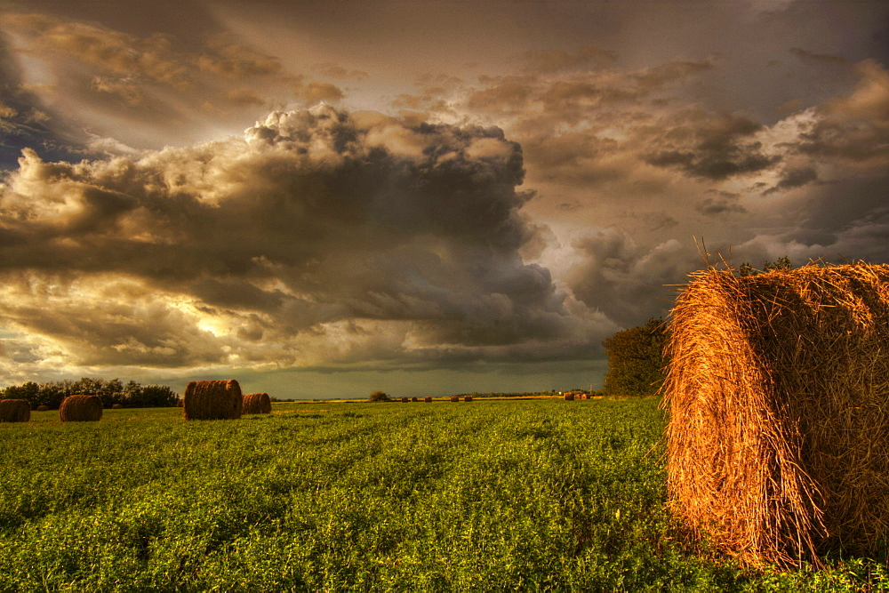 Rolled hay bales under storm clouds on a farm north of Edmonton, Alberta.