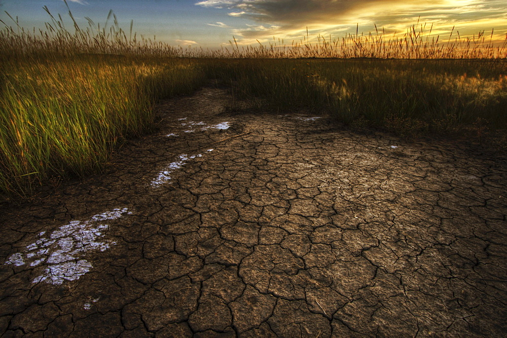 Parched, dry soil on a wheat farm north of Edmonton, Alberta