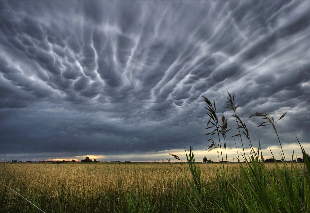 Mammatus storm clouds over a wheat field and farm north of Edmonton, Alberta.