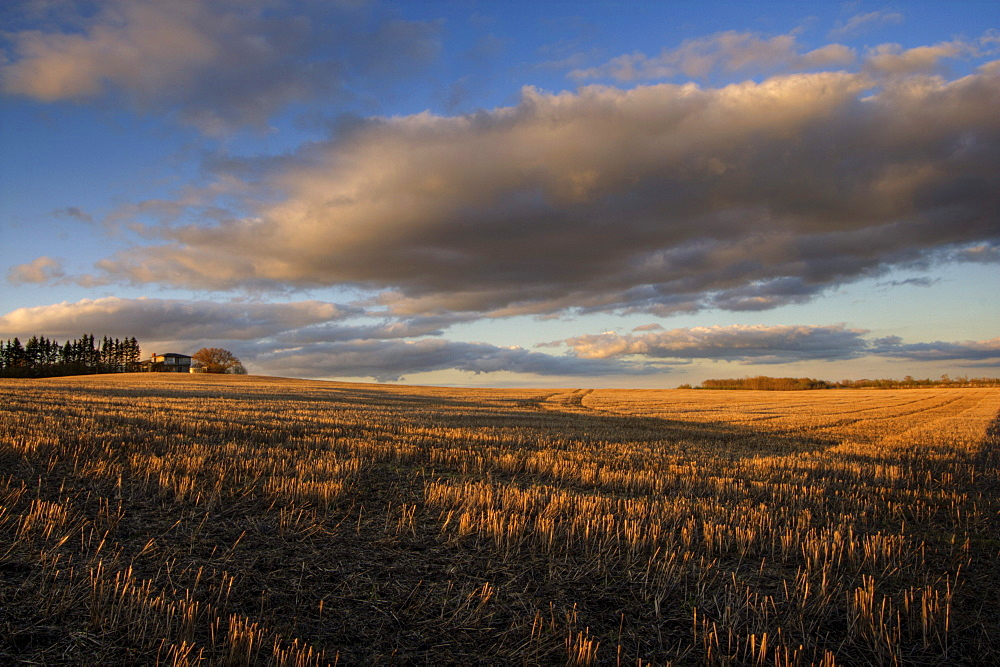 Farm and Stubble in Fall during Harvest, near Edmonton, Alberta