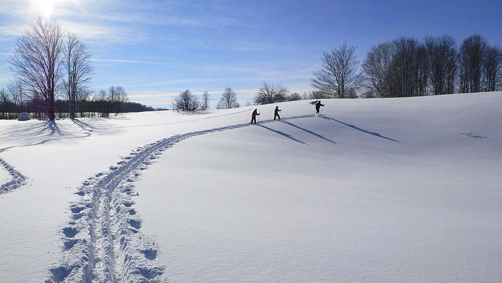 People Cross-Country Skiing, Grey County, Ontario