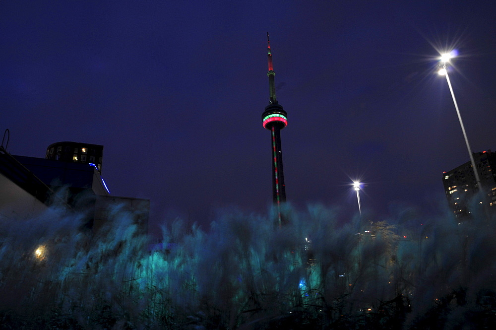 The CN Tower at night with tall grass in the foreground, Harbourfront, Toronto, Ontario