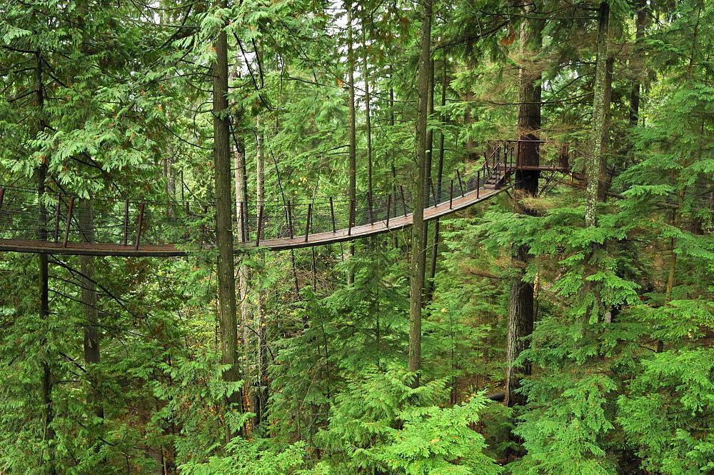 Treetops Adventure walkway at the Capilano Suspension Bridge, Vancouver, British Columbia