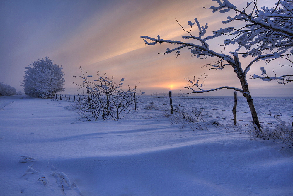 Hoar frost on trees along a snow drift covered road at sunset, rural Alberta