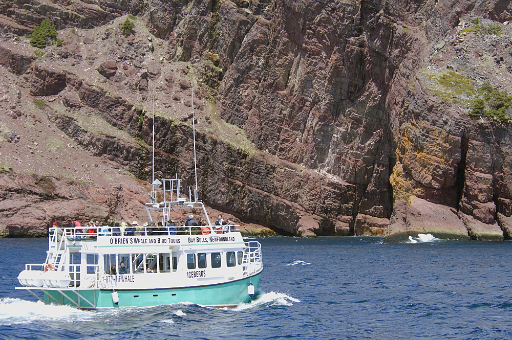 Tour Boat, Bay Bulls, Newfoundland and Labrador