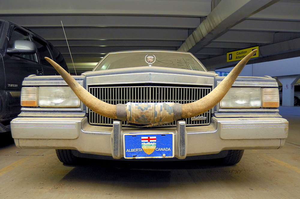 Dusty Car with Cattle Horns and Alberta License Plate, Edmonton, Alberta