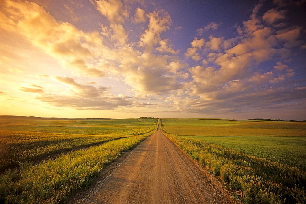Country Road through Farmland, Tiger Hills near Holland, Manitoba