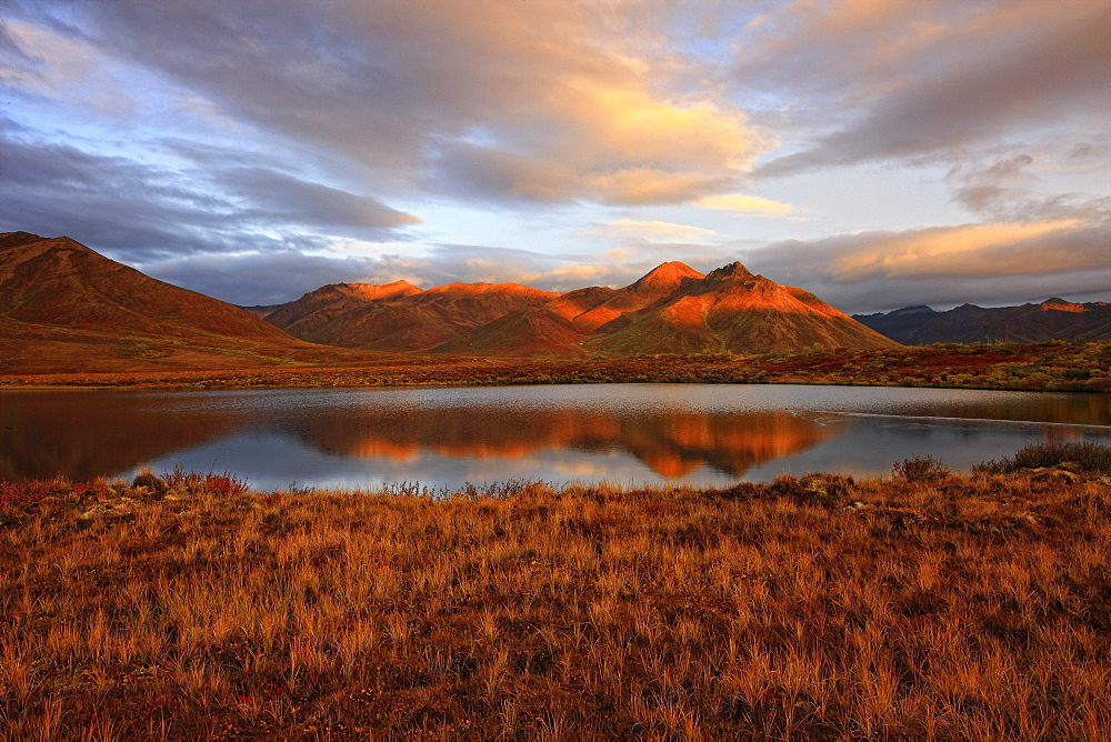 Morning sunlight on Fall colours and Mount Adney reflected into a small pond along the Dempster Highway, Yukon