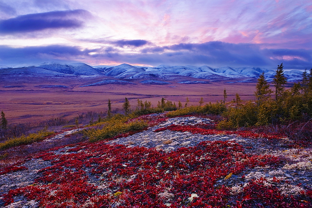 Arctic Circle, fall colours and Richardson Mountains at dawn along Dempster Highway, Yukon