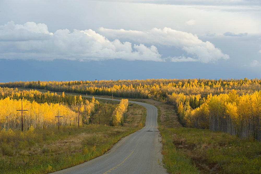 Fall colors on the Alaska Highway, near Whitehorse, Yukon