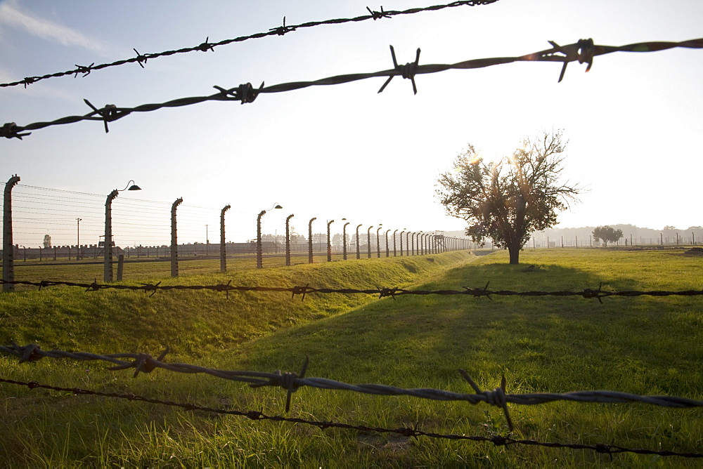 Barbed wires and tree, Auschwitz-Birkenau Concentration Camp, Oswiecim, Malopolska, Poland