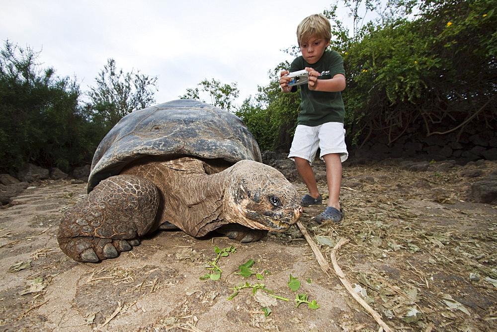 Ecuador, Galapagos Archipelago, Santa Cruz Island, Young boy photographing Galapagos Giant Tortoise (Geochelone elephantopus).
