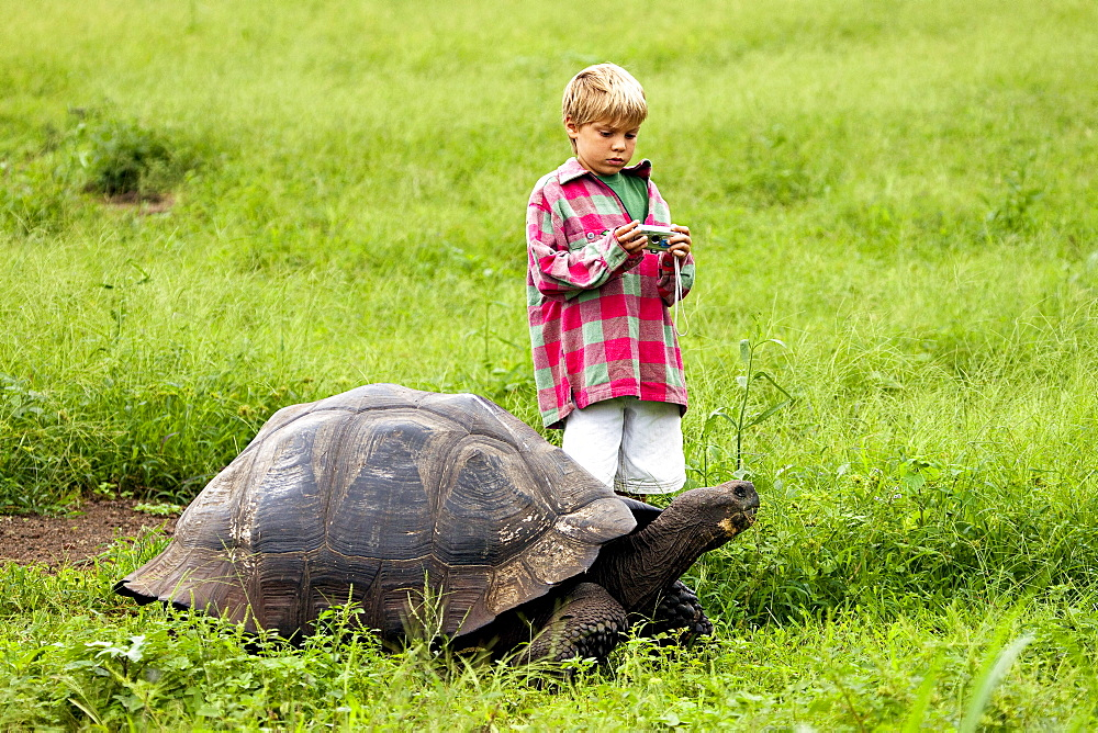 Galapagos, Giant Tortoise (Geochelone Elephantopus),A young boy gets ready to snap a photo of a Galapagos giant tortoise.