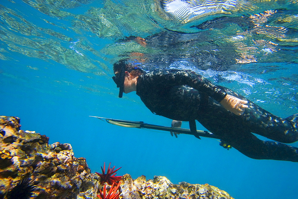 Hawaii, Maui, Makena, Spearfisher over reef, View from side.