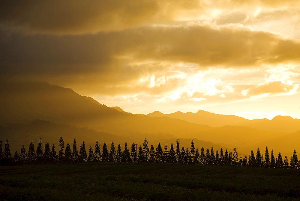 Hawaii, Oahu, Waianae, West Oahu, Pine trees and The Kaala mountain range at sunset.