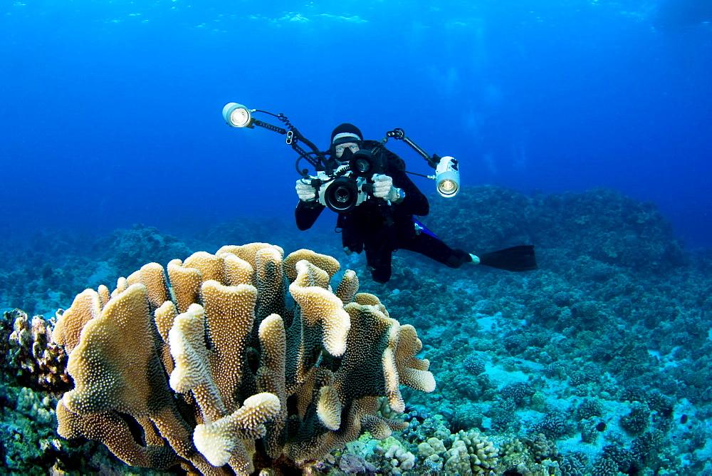 Hawaii, Big Island, Kona Coast, Photographer diver swims along ocean floor near coral.