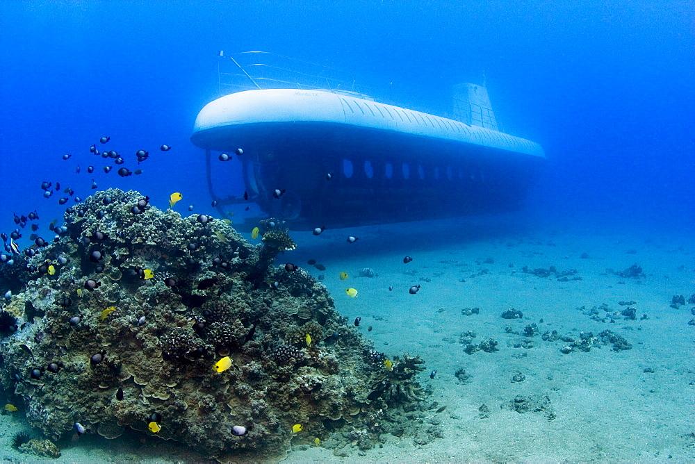 Hawaii, Maui, Atlantis Submarine passes small coral bed with sea life.