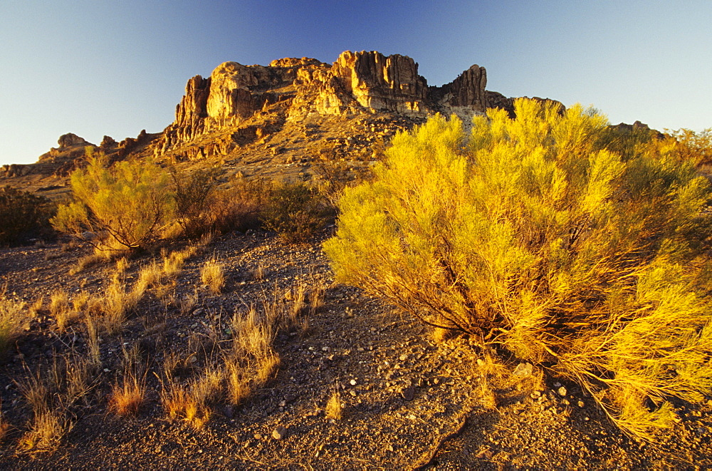 New Mexico, Rocky plateau and desert plant in afternoon sunlight.