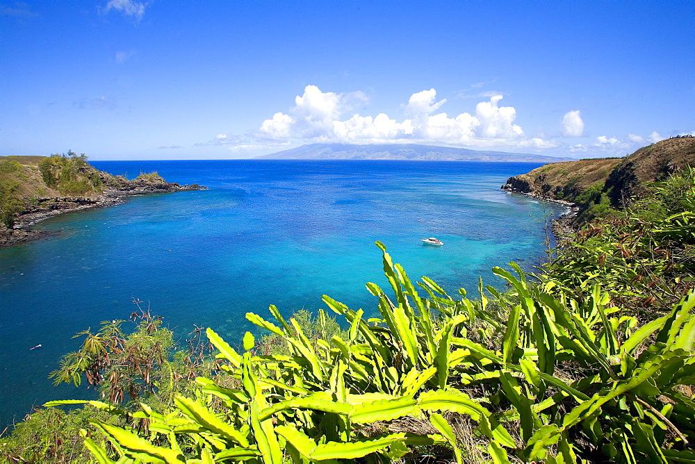 Hawaii, Maui, Honolua Bay, green brush overlooking bright blue water, Molokai in the distance.