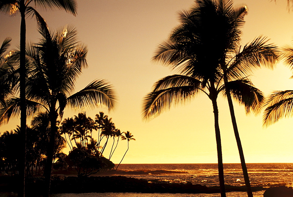 Hawaii, Big Island, Mauna Lani Resort, Ocean and silhouetted palm trees at sunset.