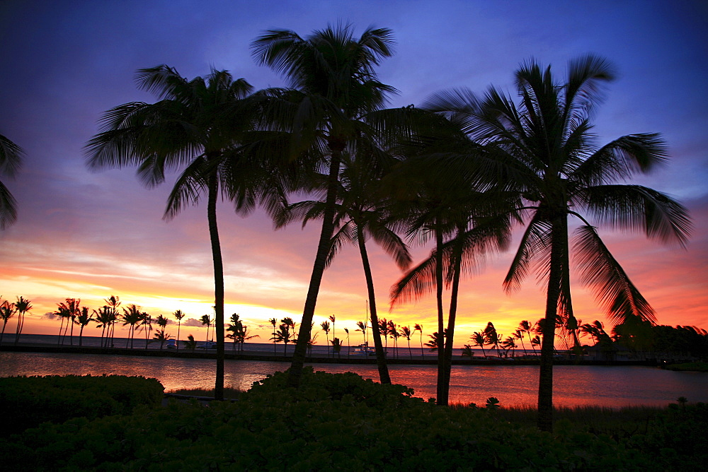 Hawaii, Big Island, South Kohala, Anaeho'omalu Bay, dramatic and colorful sunset sky with palm tree silhouettes.