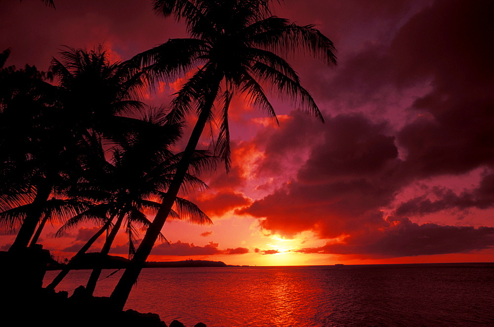 Guam, Tumon Bay, Bright red sunset and silhouetted palms on beach.