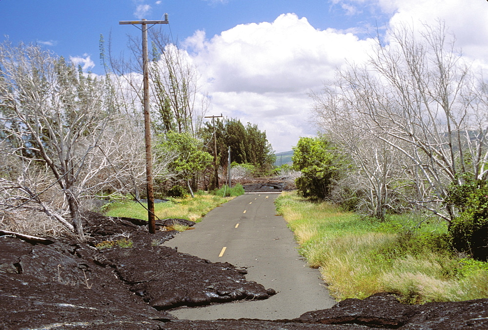 Hawaii, Big Island, Kalapana, Lava flow covers tree lined road