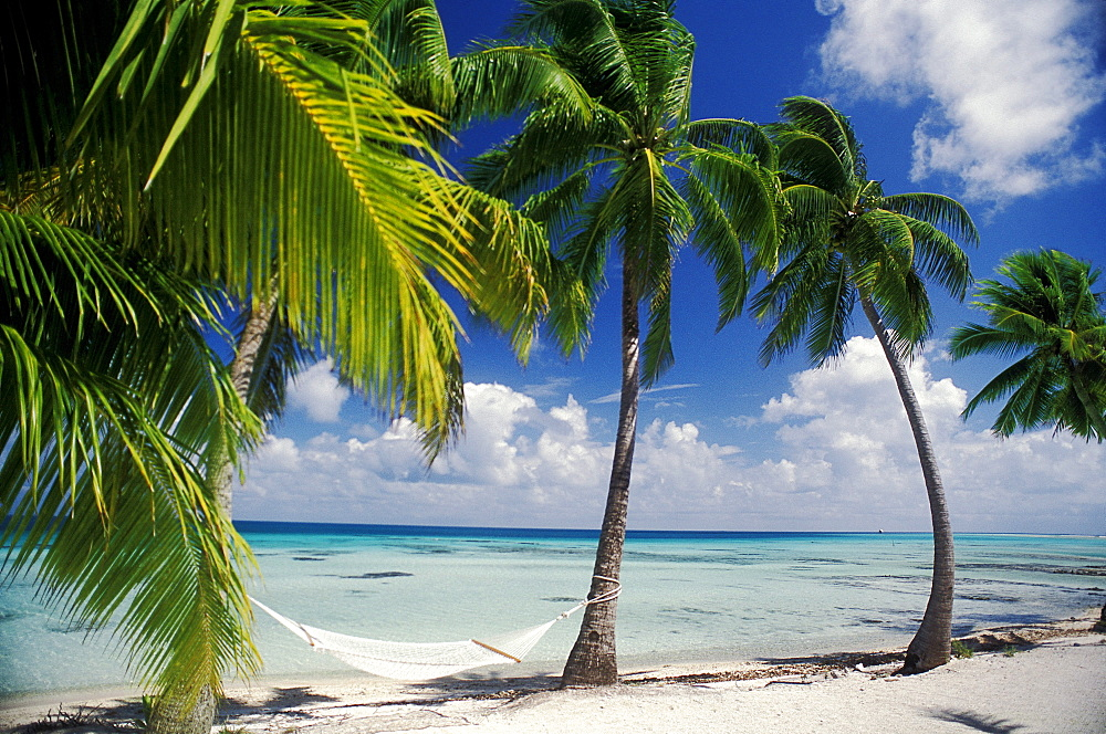French Polynesia, Tuamotu Islands, Tikehau Atoll, Palm trees across beach - 1116-37502