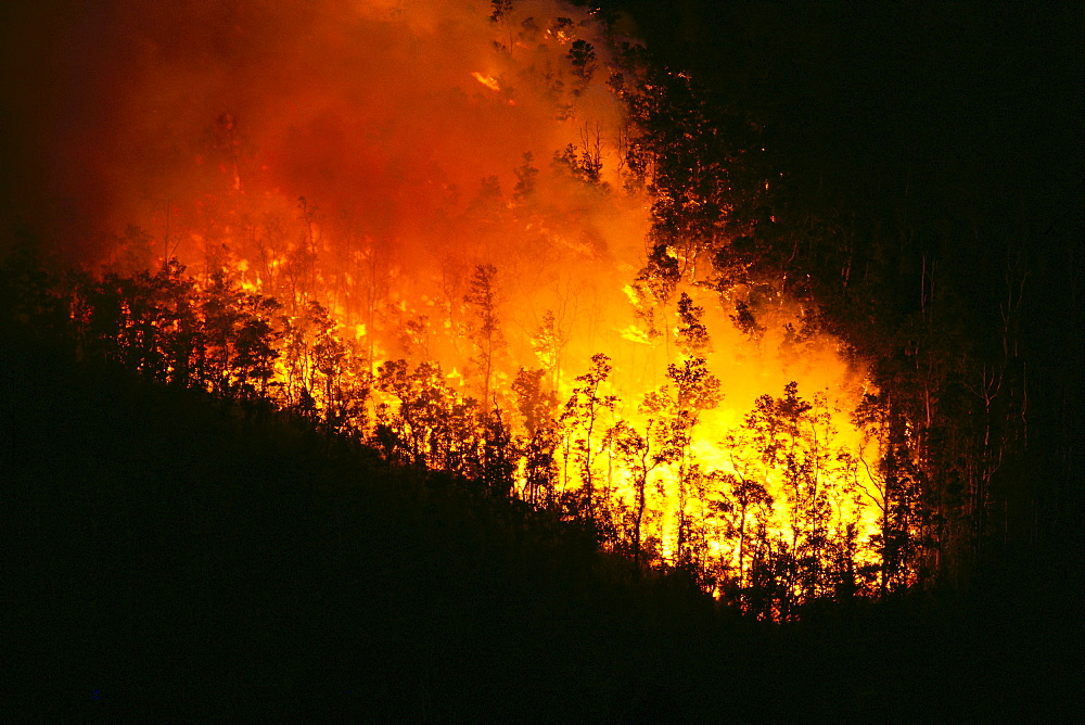 Hawaii, Big Island, Kilauea, lava flow fire burning ohia tree forest, nighttime A24F