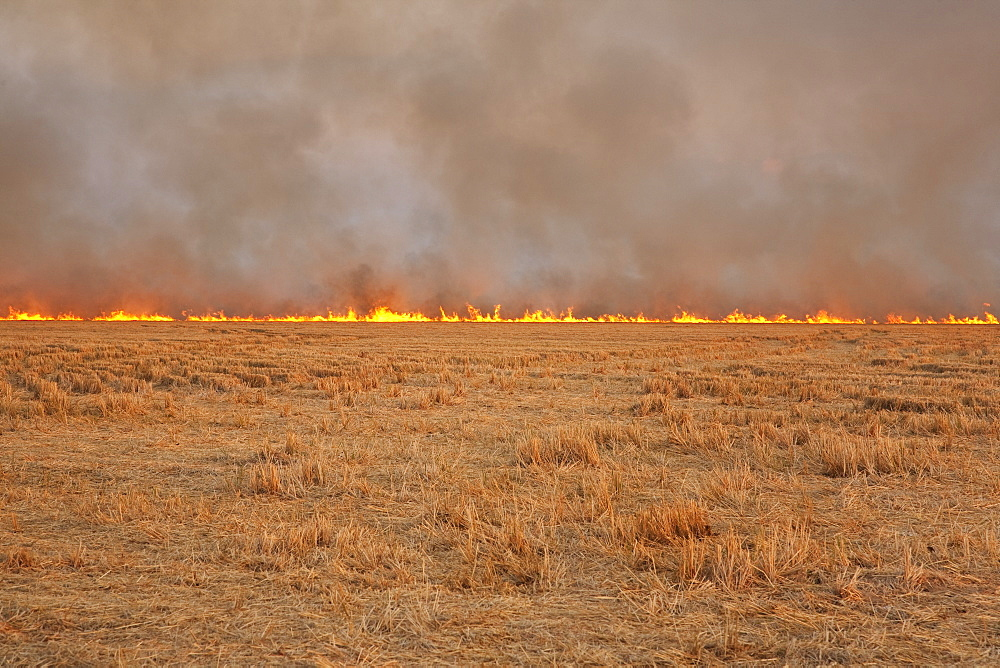 Agriculture - Rice stubble being burned after the crop has been harvested, a controversial practice. Growers burn fields to remove heavy crop residue so they can re-enter fields early the next spring to plant soybeans, and to control some rice diseases. E