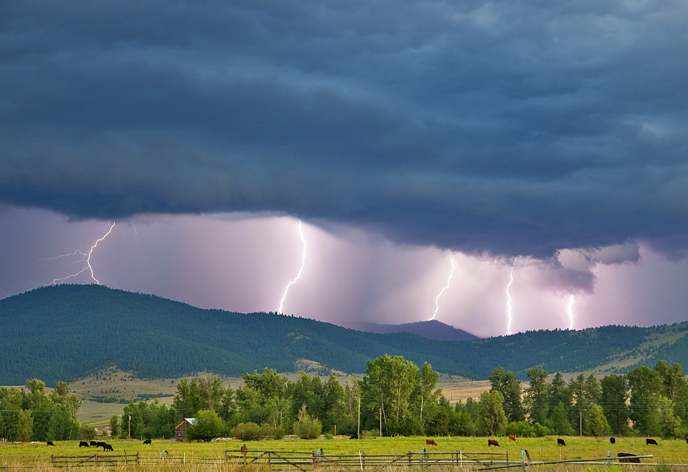 Livestock - Multiple lightning strikes along a ridgetop produced by a strong thunderstorm / Jocko Valley, near Arlee, Montana, USA.