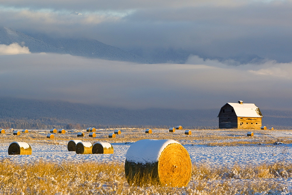 Agriculture - Round hay bales in the field with a rustic barn in the background just after a light snowstorm / Mission Valley, Montana, USA.