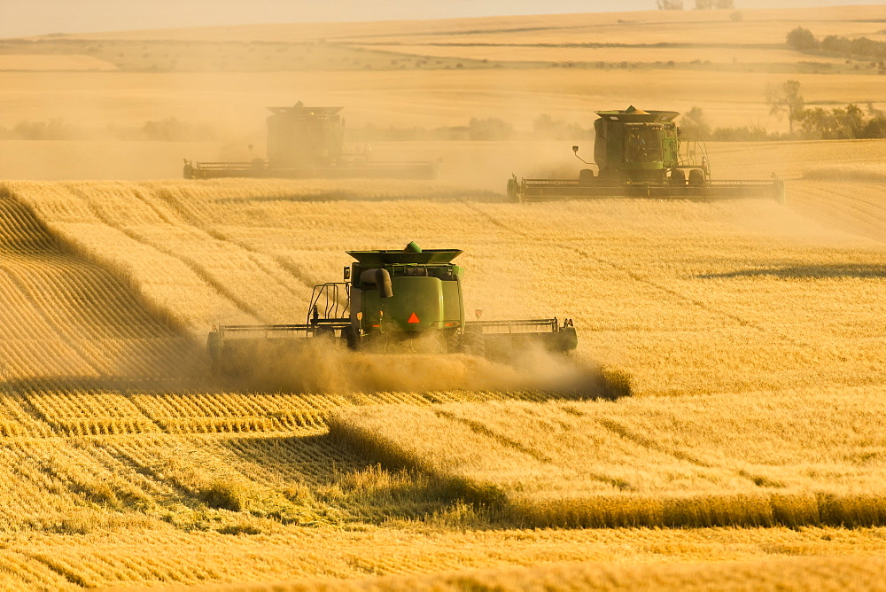 Paplow Harvesting Company custom combines a wheat field, near Ray; North Dakota, United States of America