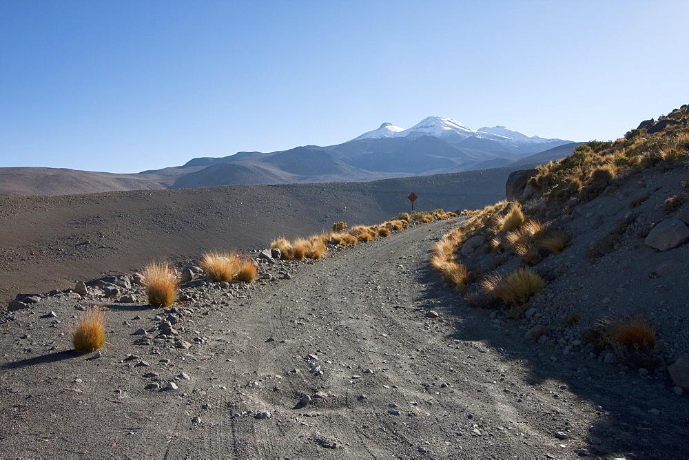 Paja Brava (Festuca Orthophylla) Growing By The Roadside, El Tatio, Antofagasta Region, Chile