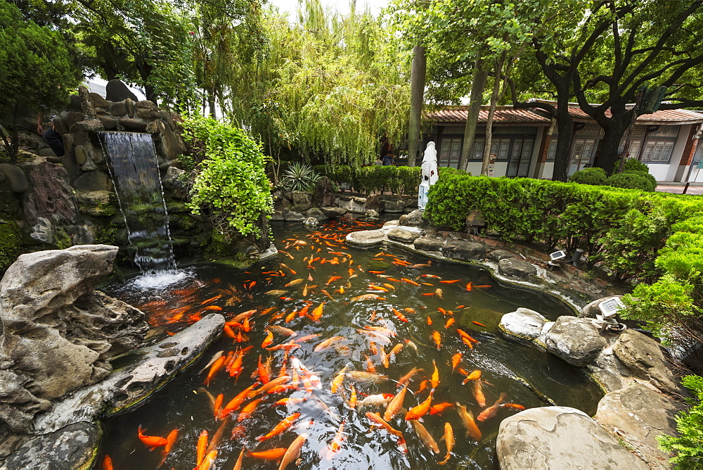 Koi in the moat around Chihkan Tower (Fort Provintia), Tainan, Taiwan