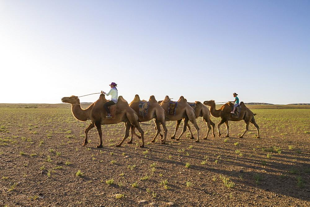 Women riding Bactrian camels (Camelus bactrianus), Elsen Tasarkhai, Arkhangai Province, Mongolia