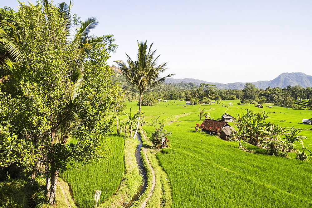 Rice fields in the valley of the Unda river, Sidemen, Bali, Indonesia