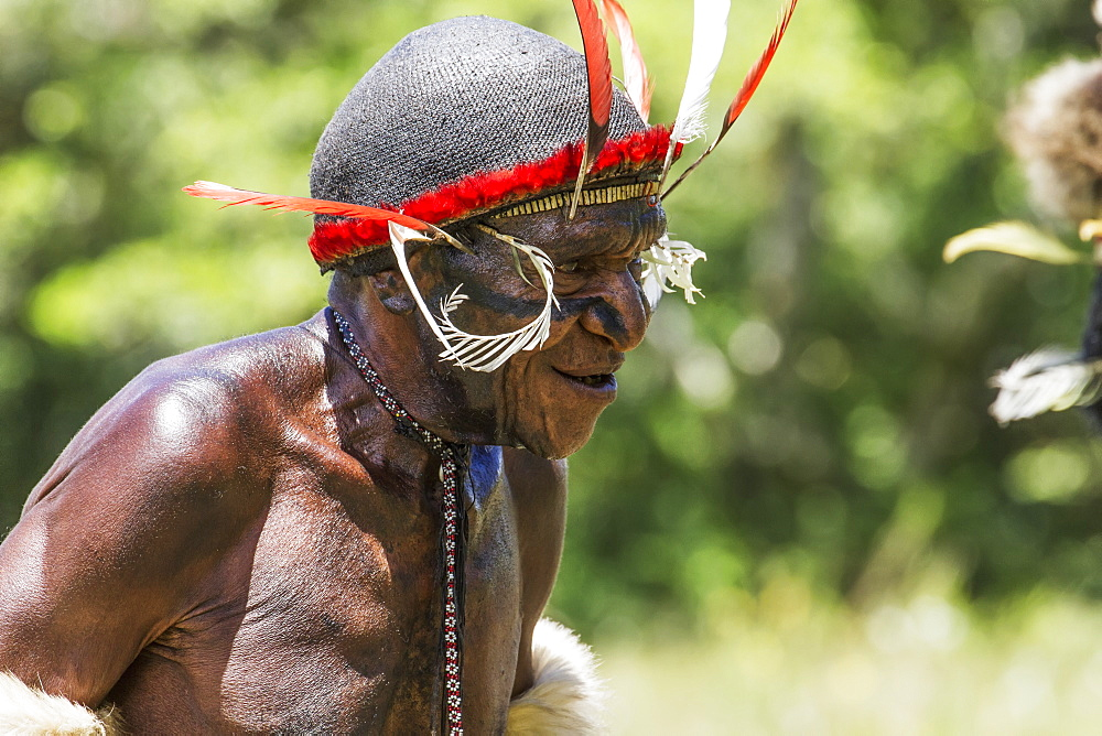 Dani man wearing an elaborate headdress of bird of paradise or cassowary feathers, Obia Village, Baliem Valley, Central Highlands of Western New Guinea, Papua, Indonesia